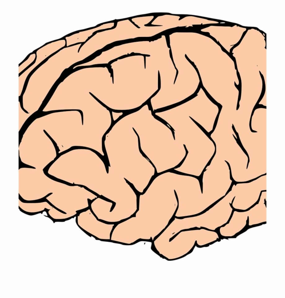 brain clipart human brain clipart brain human knowledge transparent background white brain png transparent png download 1014534 vippng brain clipart human brain clipart brain