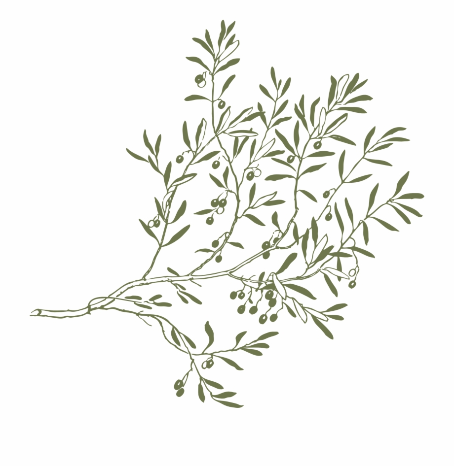 Olive Drawing Clip Art