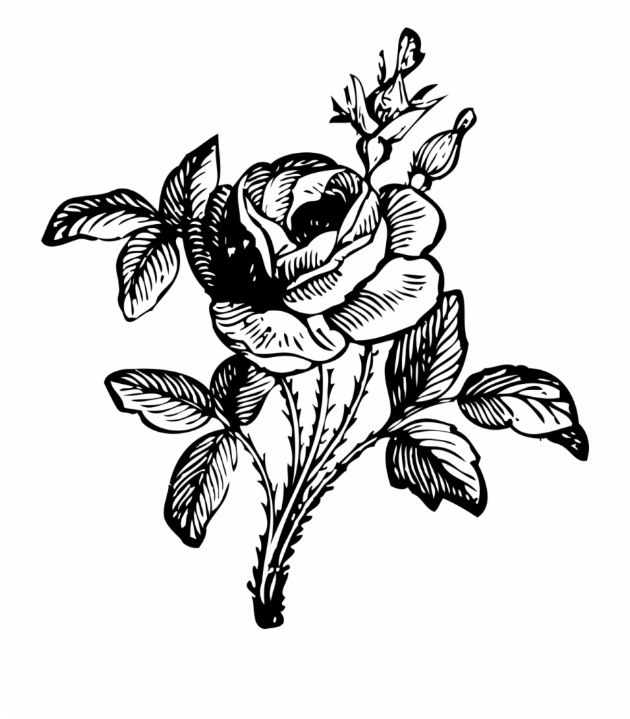 How To Draw A Simple Rose Bush Bunch Of Flowers Black And White Rose Drawing Png Transparent Png Download 1110985 Vippng