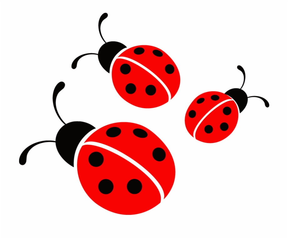 Ladybugs Clipart Free Download - Ladybug Png Transparent PNG Download  #1399519 - Vippng