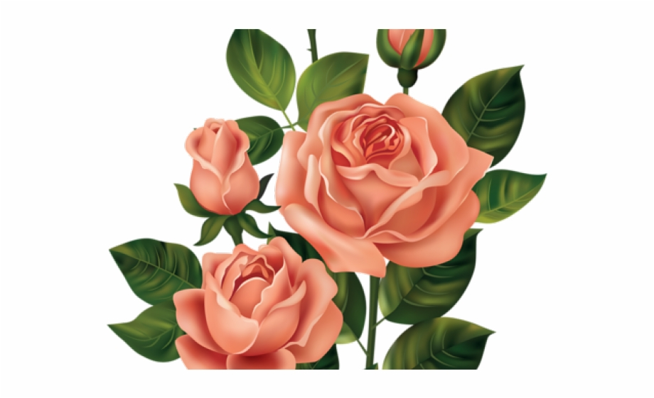 rose bush clipart dead vintage bunga pink png transparent png download 1496108 vippng rose bush clipart dead vintage bunga