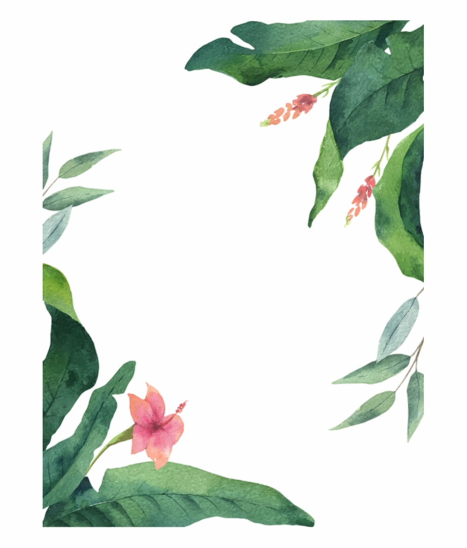 Frame Leaf Flower Tropical Summer Watercolor Impatiens Transparent Png Download 1550695 Vippng We are uploading new and fresh contents on a daily basis. frame leaf flower tropical summer
