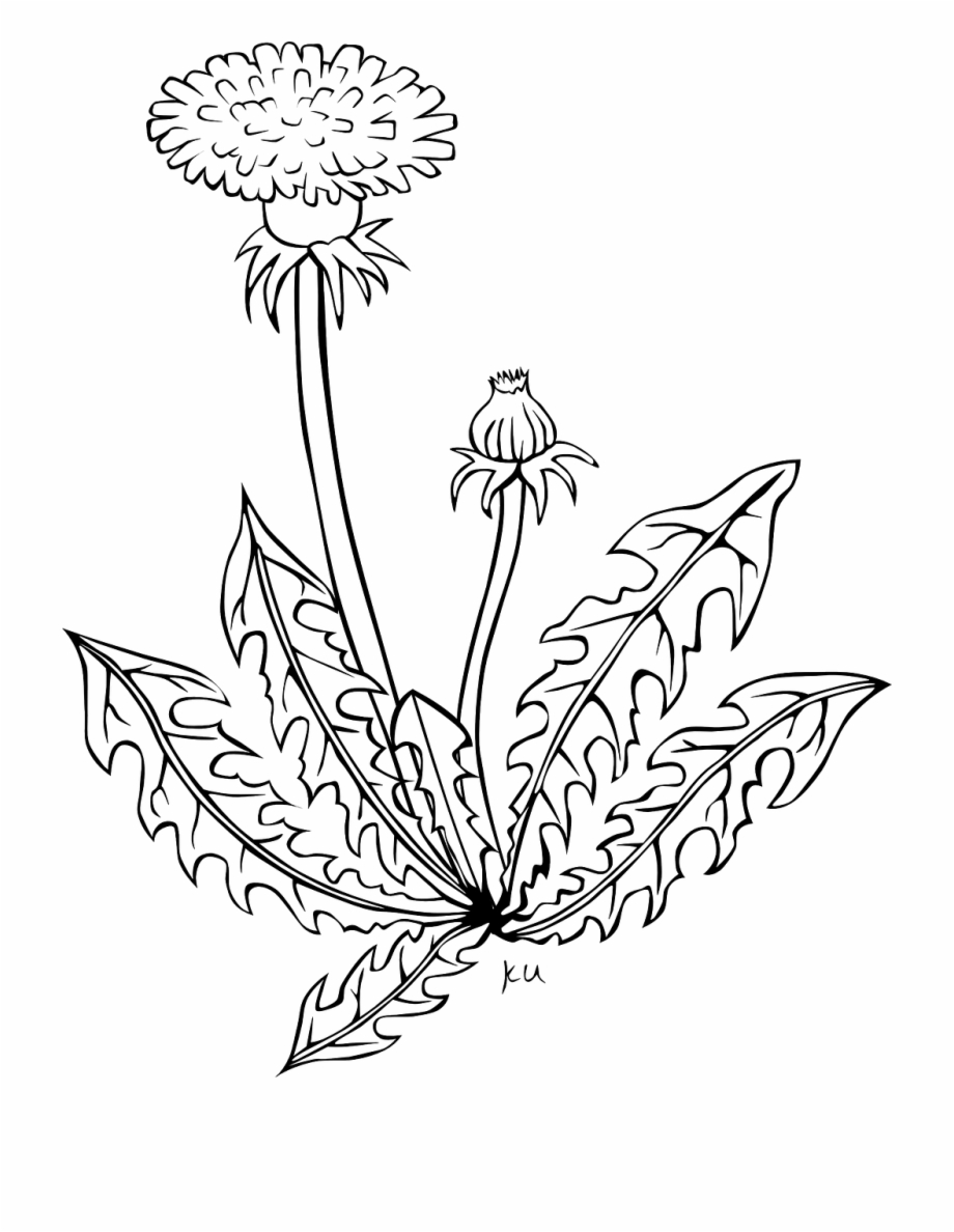 Psychedelic Weed coloring page | Free Printable Coloring Pages | 1188x920