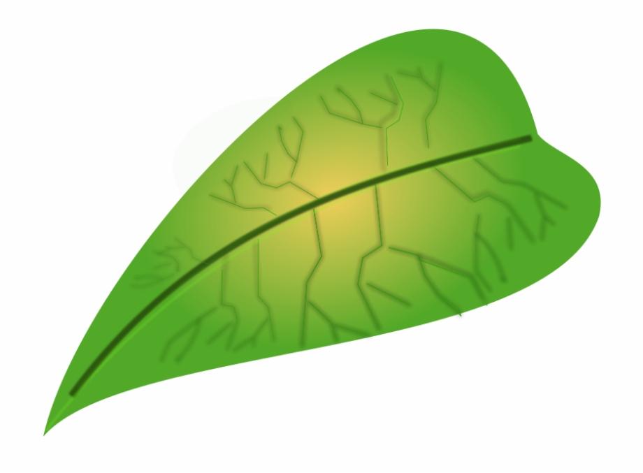 Jungle Leaves Clip Art - Leaf Images Free Downloads