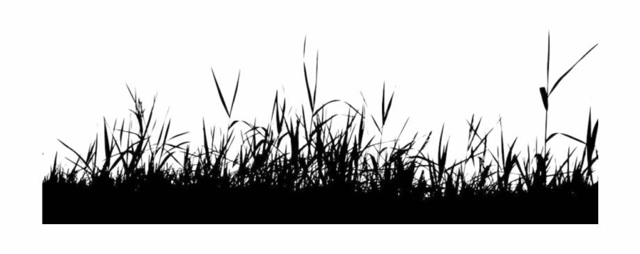 black grass nature silhouette free vector grass and flowers transparent png download 2188779 vippng black grass nature silhouette free