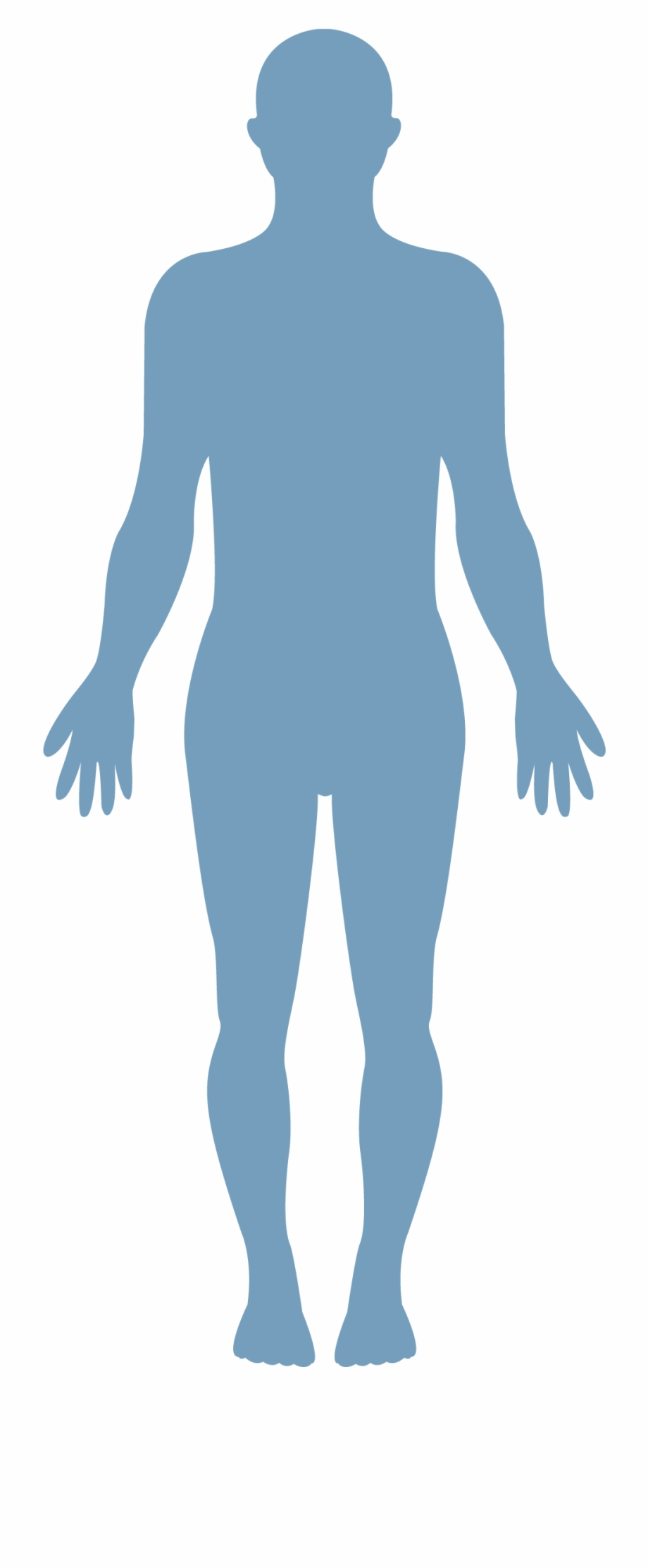 human body vector transparent healthy body png transparent png download 2288413 vippng human body vector transparent healthy