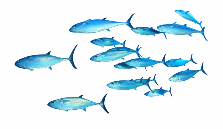 Fish Swimming Png Group Of Fish Png Transparent Png Download 278463 Vippng