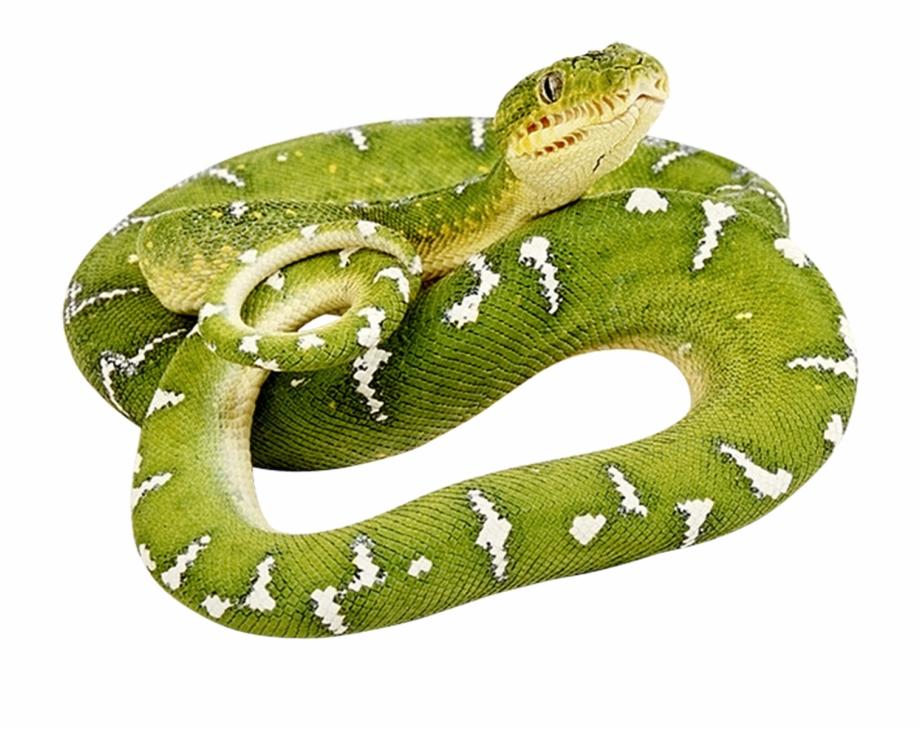 Green Snake Png Image Green Snake No Background Transparent Png Download 280969 Vippng Download 94 snake png images with transparent background. green snake png image green snake no