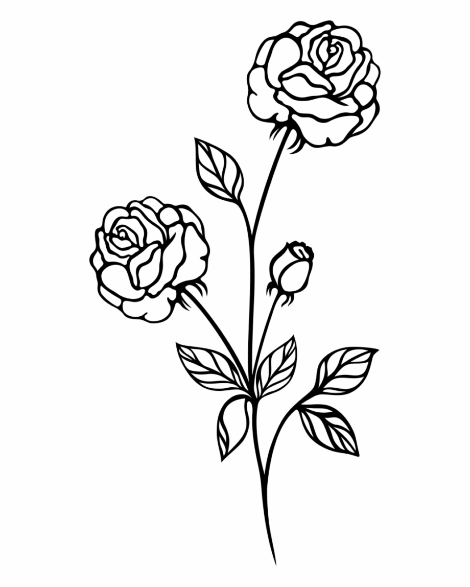 Drawing Rose Line Art Flower Flora Png Image With