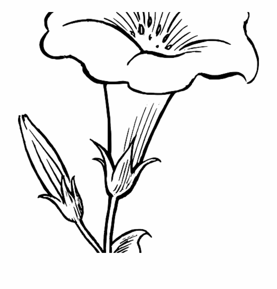 Flower Outline Drawing Black Outline Drawing Flower - Lily Clipart Black And White | Transparent ...