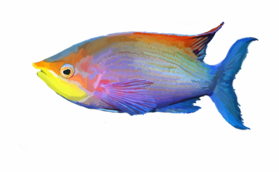 Tropical Fish Png Tropical Fish Transparent Background Transparent Png Download 4127945 Vippng