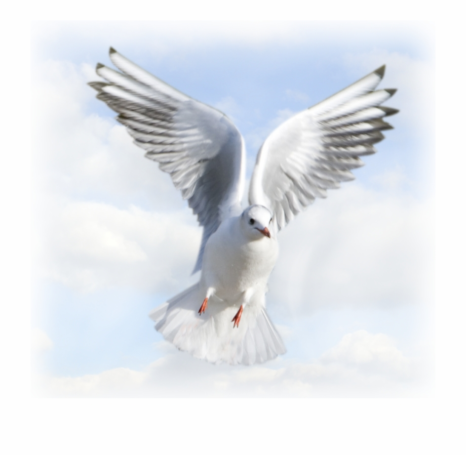 Holy Spirit Dove Png Dove Images Holy Spirit Png Transparent Png Download 425863 Vippng Choose from 1500+ dove graphic resources and download in the form of png, eps, ai or psd. holy spirit dove png dove images holy