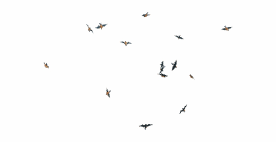 Birds Png New Birds Flying Gif Png Transparent Png Download 4234908 Vippng