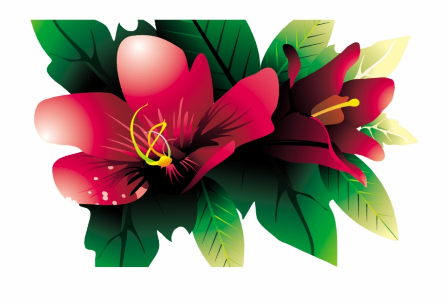 Images Of Tropical Flower Vines For Free Download On