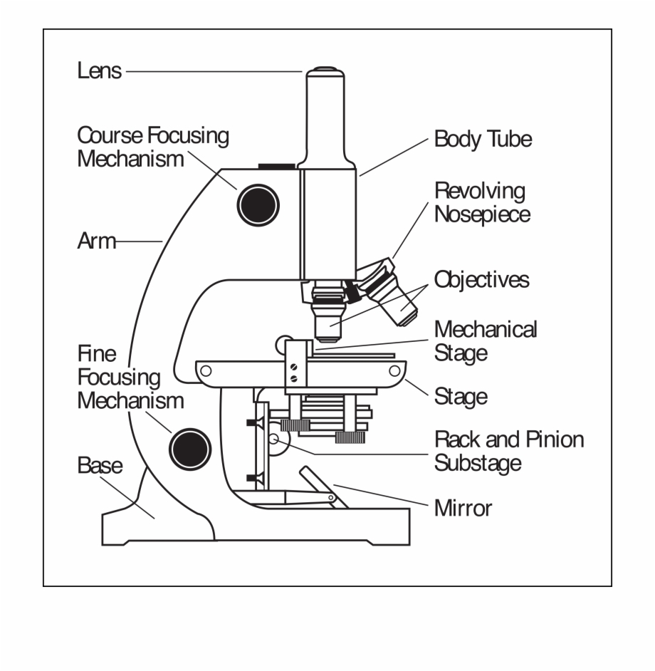 Clipart Microscope Parts Labeled Find The Parts Of A Microscope