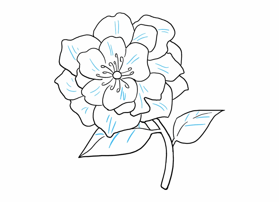 How To Draw A Really Easy Tutorial Peony Flower Drawing