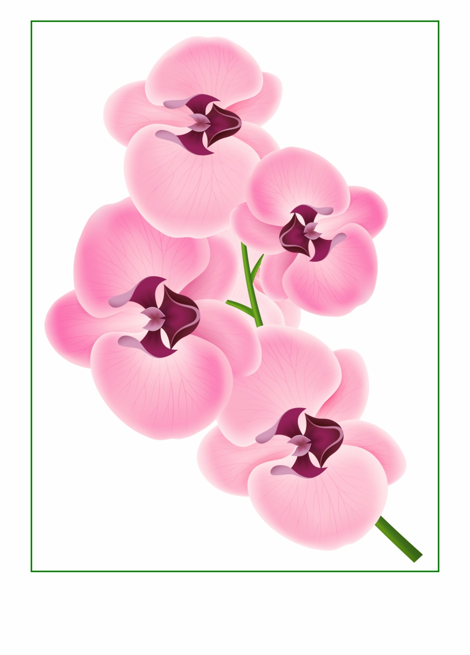 Incredible Pink Png Image Flowers Of Bunga Orchid Clip Art
