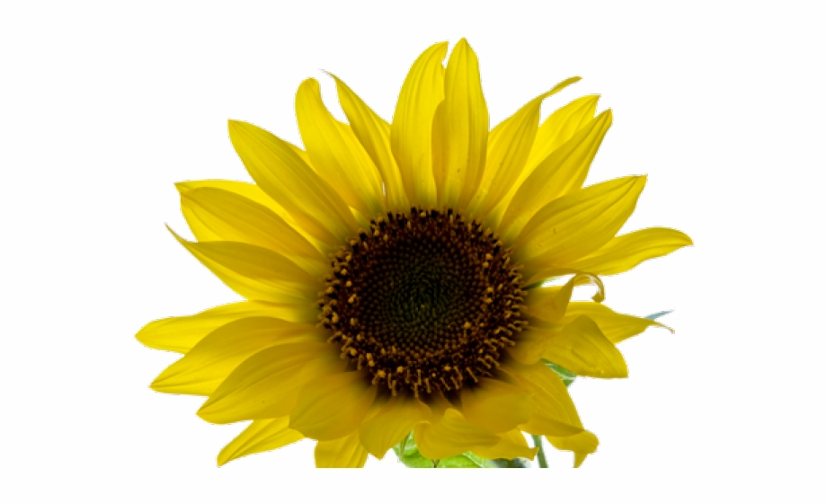 Clipart Wallpaper Blink Yellow Aesthetic Flowers Png