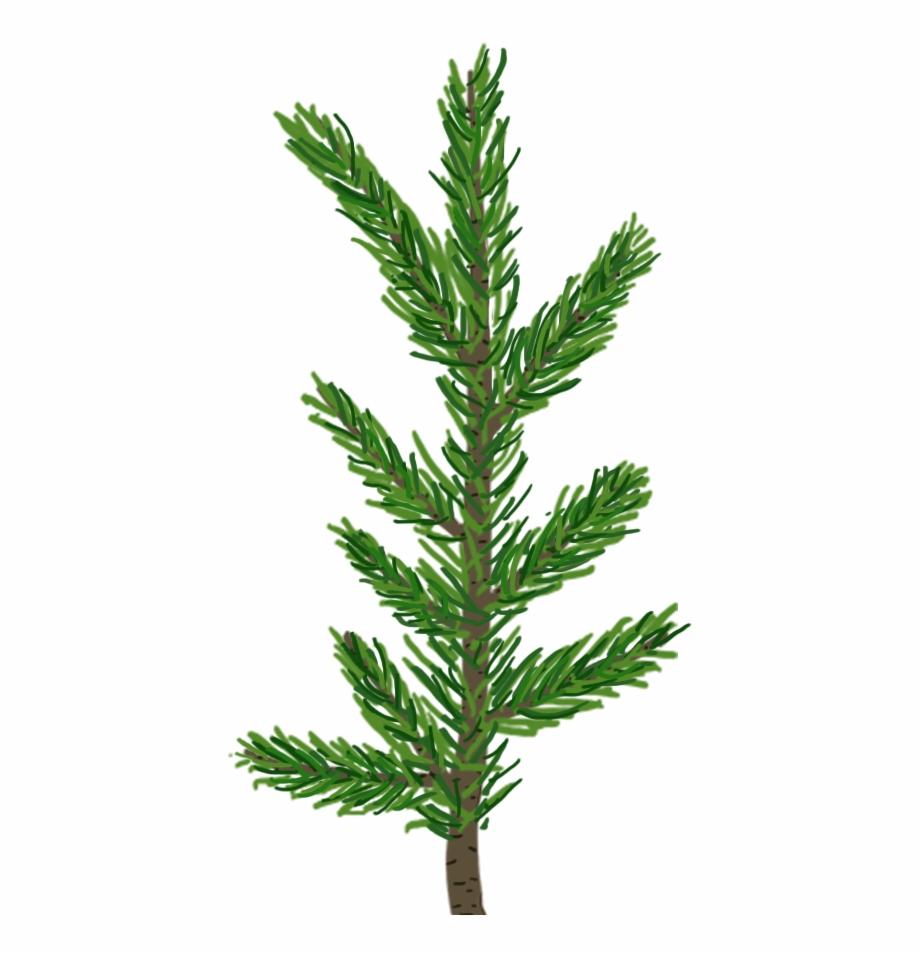 Christmas Leaf Png.Pinebranch4 Inunity Transparent Pine Leaf Png