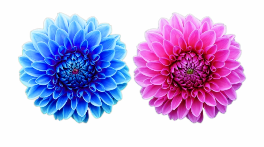 Beautiful Free Flower Png File Nature Cool Png Natural
