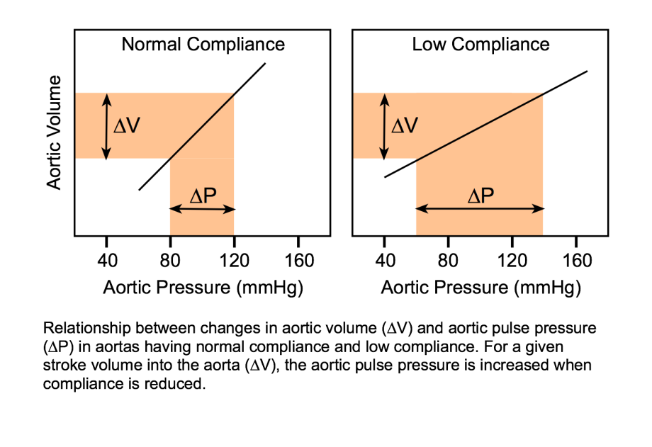 Stroke Volume And Aortic Compliance Determine Pulse