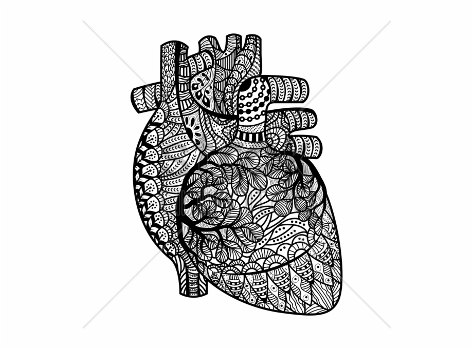Image Result For - Adult Coloring Pages Human Heart Transparent PNG  Download #64379 - Vippng