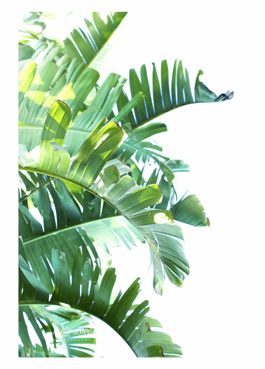 Green Leaf Png Clipart Tropical Leaves Transparent Background Transparent Png Download 728108 Vippng Lifetime license to this design no credit or attribution needed pdf certificate can't be used for merch • pdf lifetime license • unlimited sales. green leaf png clipart tropical