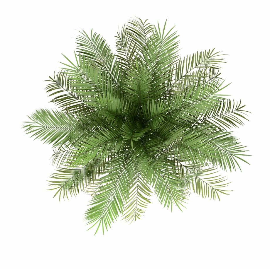 palm tree top view png indoor plant top view png transparent png download 775410 vippng palm tree top view png indoor plant