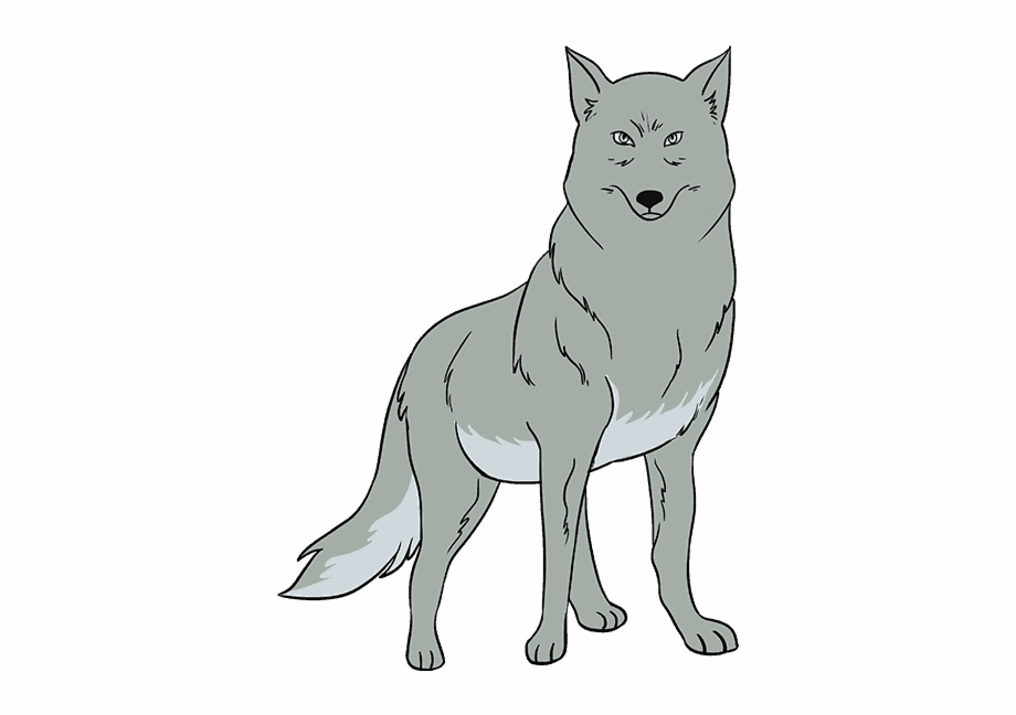 How To Draw Wolf Gray Wolf Easy Drawing Transparent Png Download 821018 Vippng