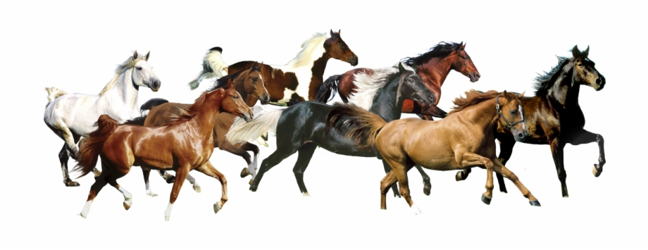 7 White Horse Images Running Horse Transparent Png Download