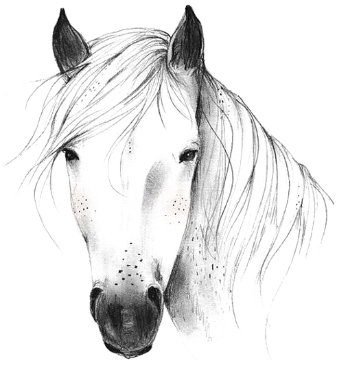 Horse Png Penguin Drawing Arts And Crafts Storage Horse Drawings Drawn Horse Png 14359 Vippng