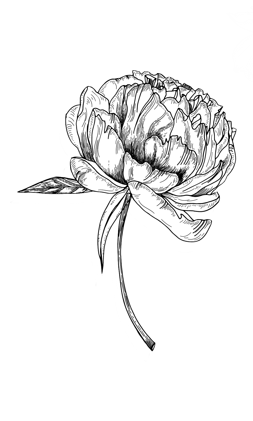 Flower Sketch Png Jpg Black And White Library Creek Drawing Flower Sketch 1417165 Vippng