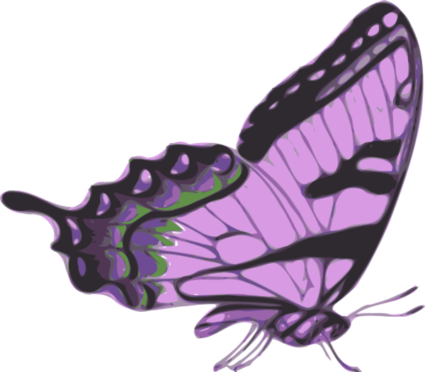 butterfly vector png - side of butterfly clipart - butterfly side view |  #1465383 - vippng  vippng