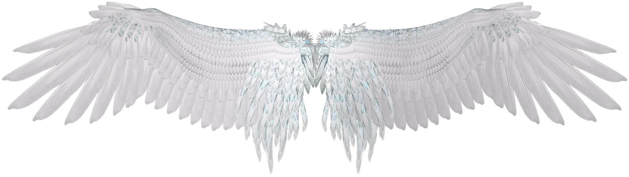 Angel Wingspng Wing White Feather Angel Wings Png Image