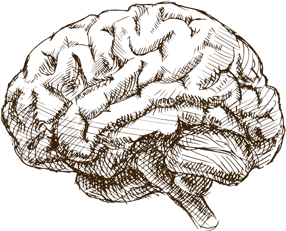 Brain Drawing Png Drawn Brains Anxiety Brain Give Me A Sketch Of The Brain 2144462 Vippng