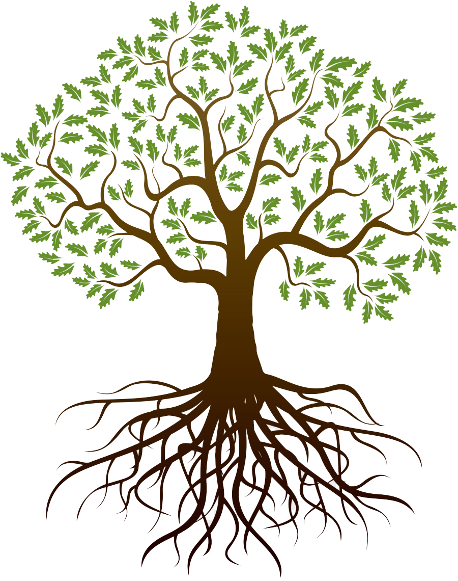 tree roots png - Roots - Tree With Roots Transparent ...