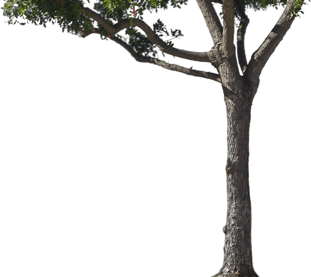 tree trunk png - Tree , Png Download - Long Tree Trunk Png ...