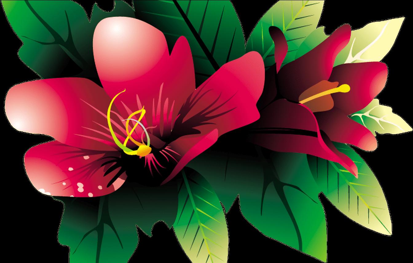 Тропические цветы картинки для детей