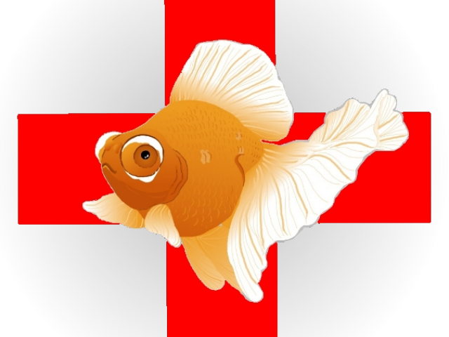 Dead Fish Png Gold Fish Clipart Dead Goldfish Cartoon 4957810 Vippng