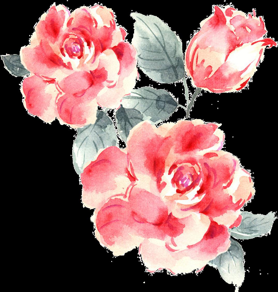 rose bush png - Drawing Roses Garden Rose - Drawn Pink ...