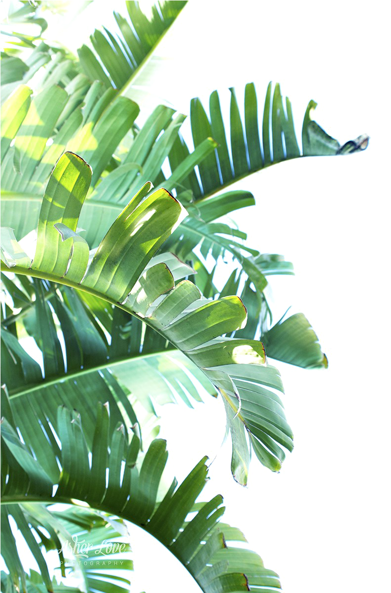 green leaf png - Green Leaf Png Clipart - Tropical Leaves ...