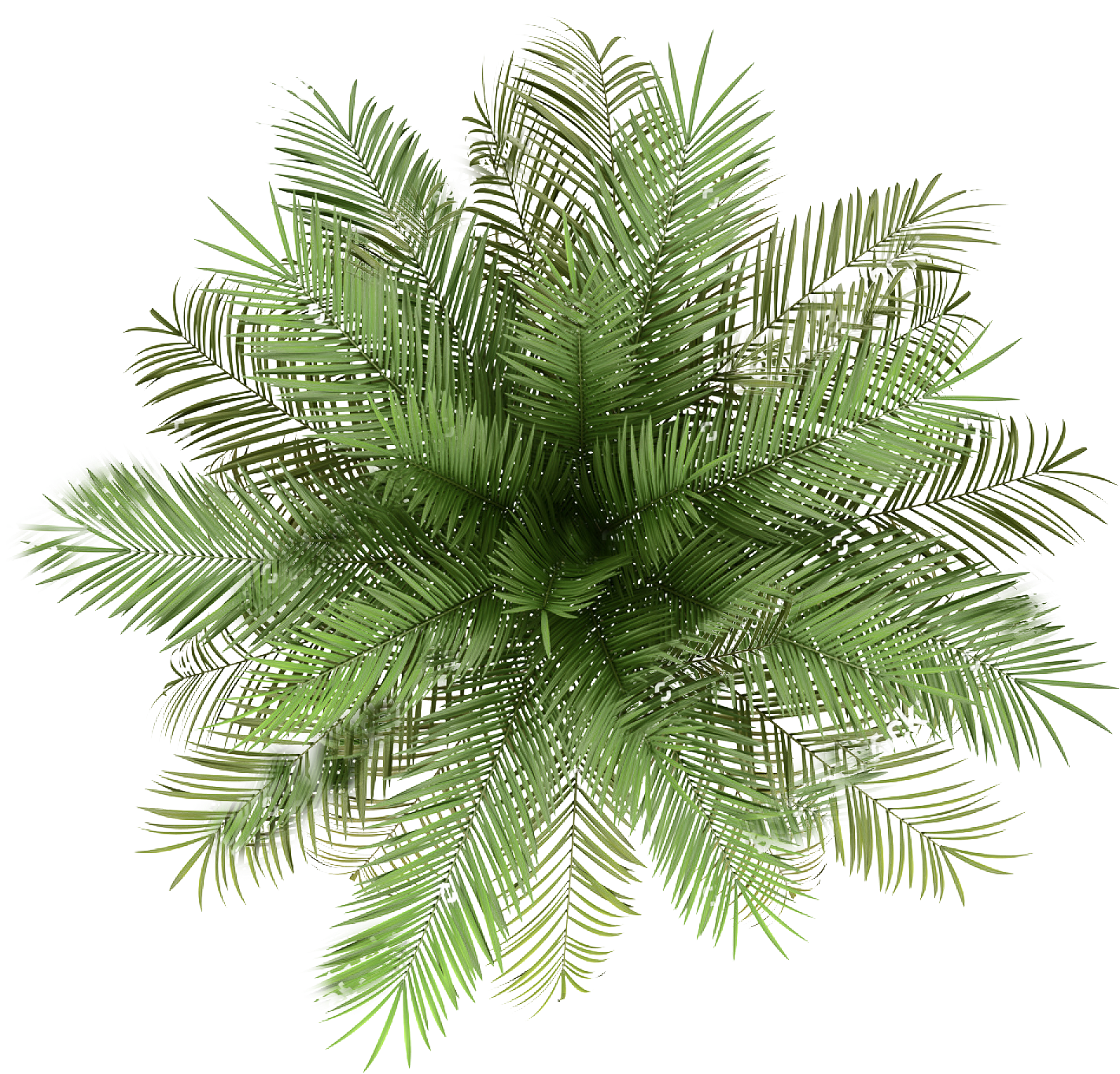 palmtree png - Palm Tree Top View Png - Indoor Plant Top ...